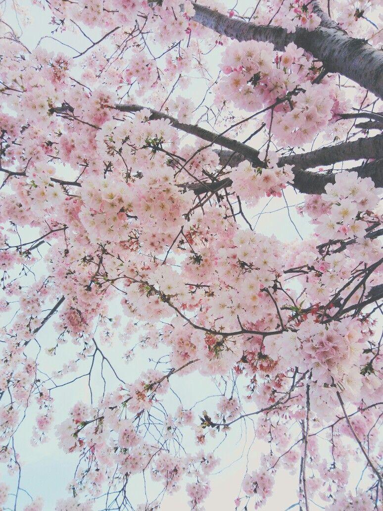 Wallpaper spring, pink flowers