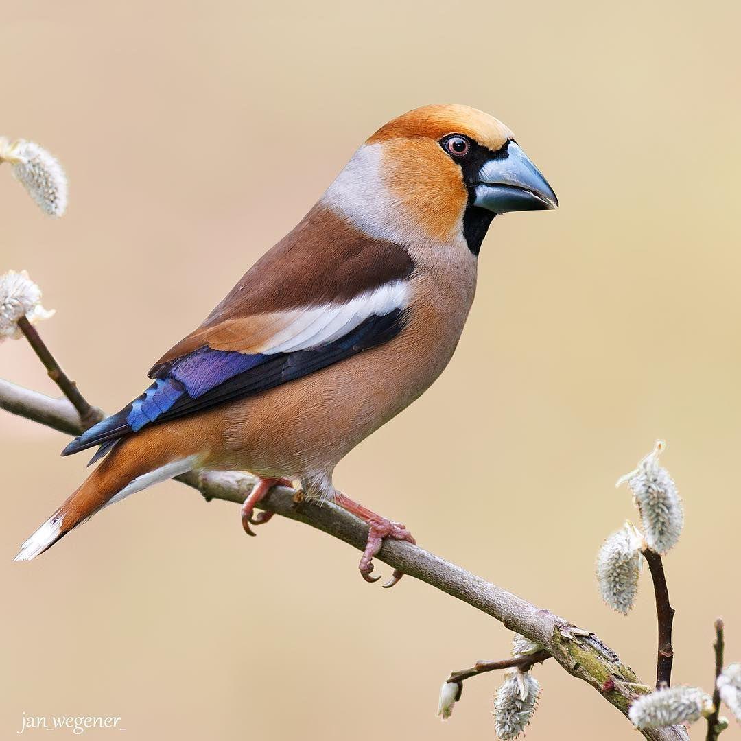 Фото: Снимки ярких птиц, которые переносят в мир дикой ...