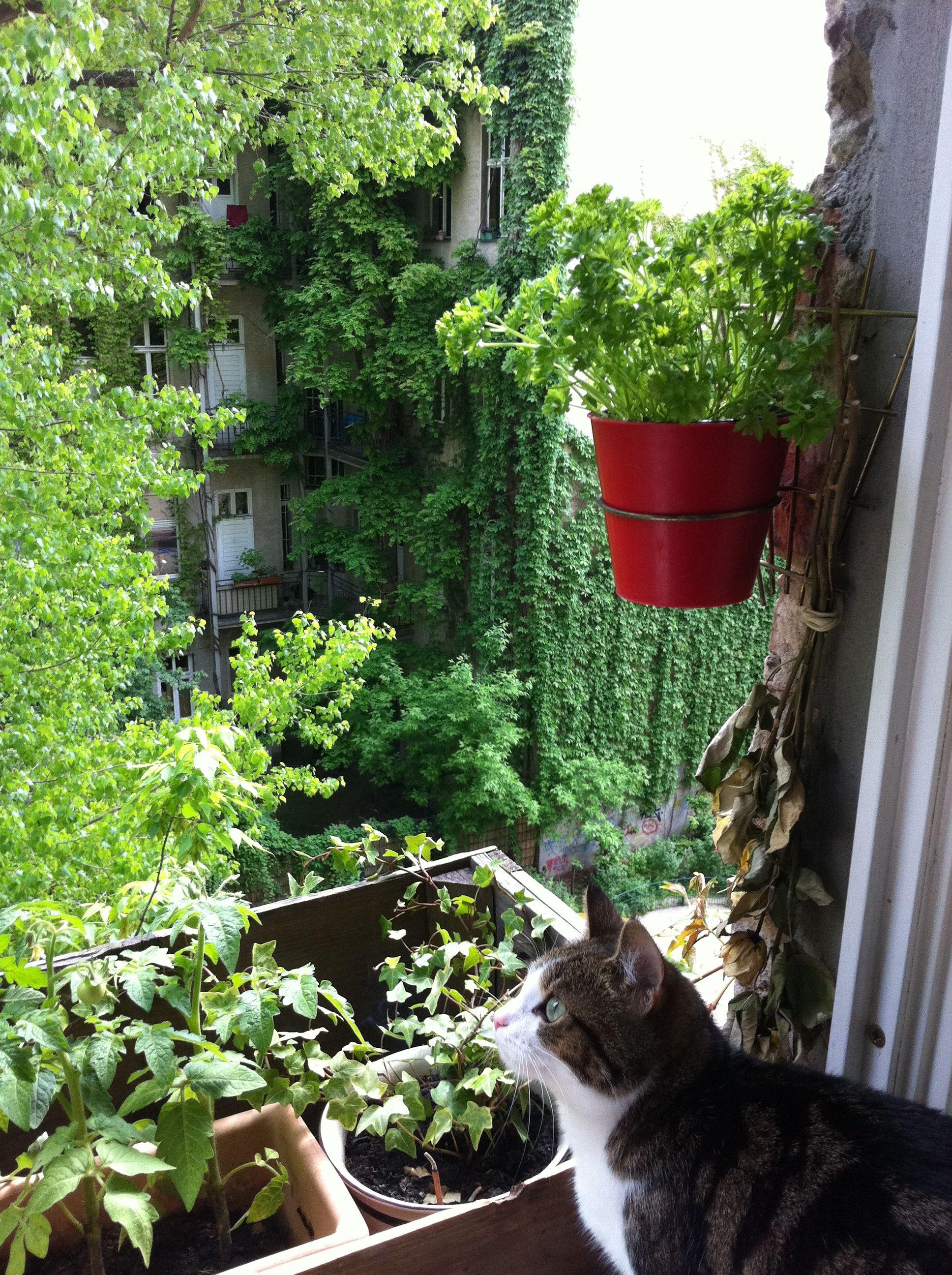 living in berlin Wesna Wilson Design