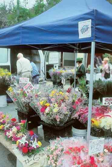 Grow Flowers For Profit Organic Gardening Garden Growing Flowers Cut Flower Garden Flowers