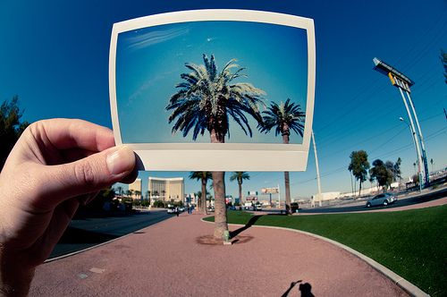 Polaroids and palm trees.