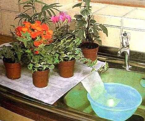 Piante Grasse Da Appartamento Quando Innaffiare.I Migliori Metodi Per Annaffiare Le Piante Quando Partite Per Le