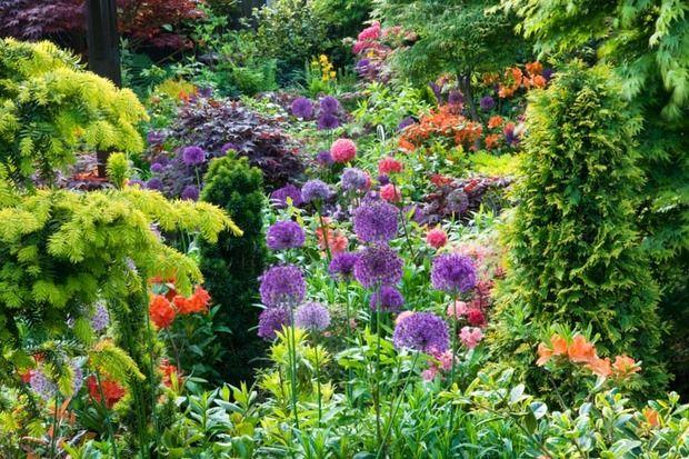 Plant combinations border ideas border combinations for Perennial plant combination ideas