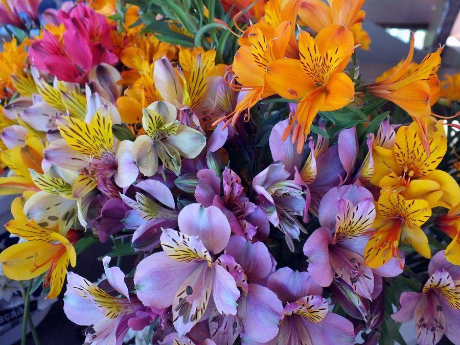 arco iris permanente en las flores de esta planta! | iris and gardens