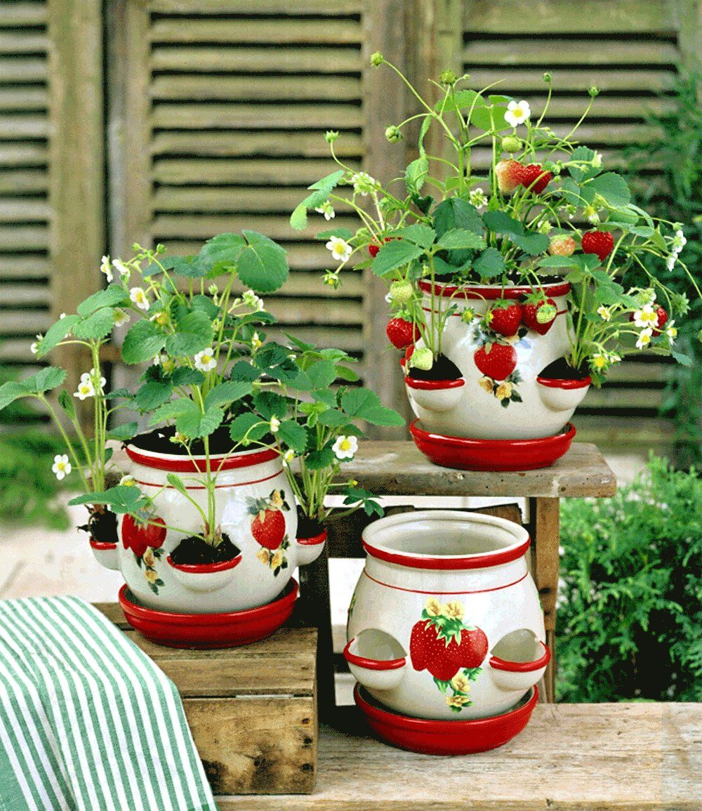 Casa Louise Erdbeere Erdbeeren Bei Baldur Garten Erdbeeren Pflanzen Kuchenfenster