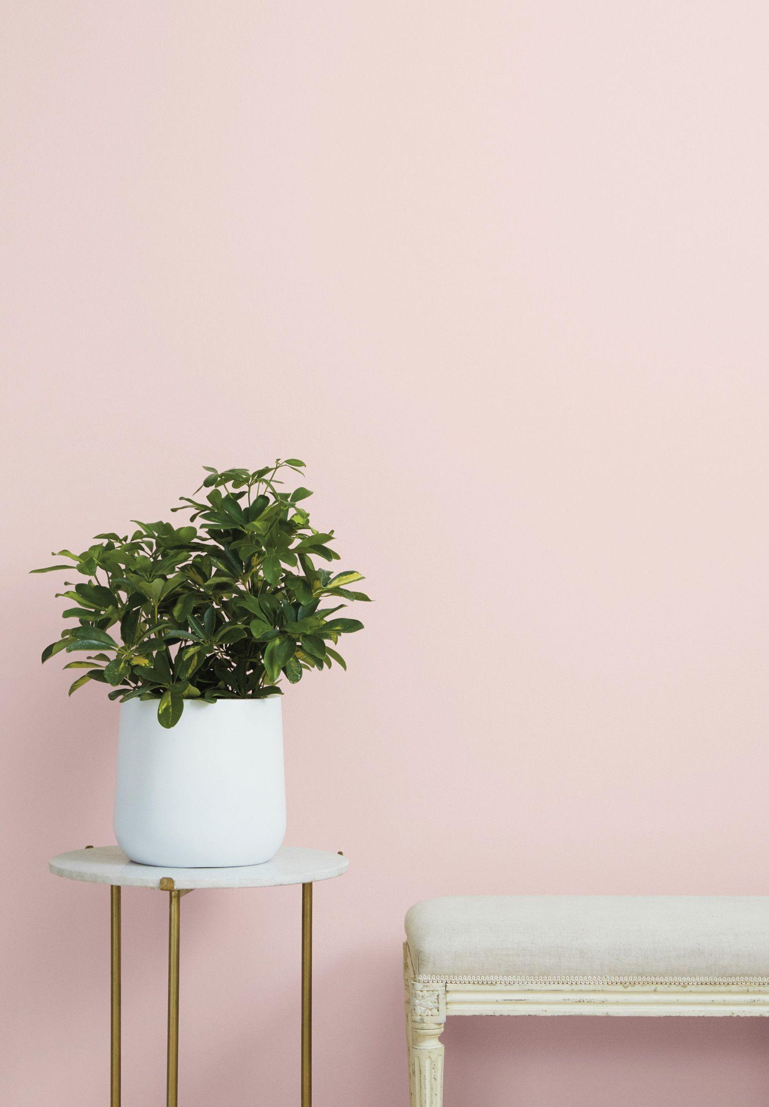 Zodiac Colors Zodiac Signs Colors Clare Pink Paint Colors Light Pink Paint Pink Bedroom Walls