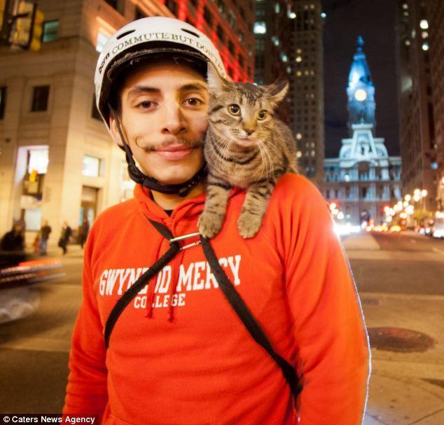 猫 肩 に 乗る Szukaj W Google Cute Cat Gif Black Cat Cats