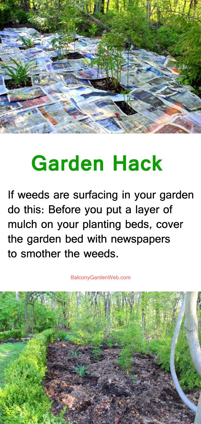 22 Gardening Hacks That Ll Change The Way You Garden Forever Home Vegetable Garden Organic Vegetable Garden Organic Gardening Tips