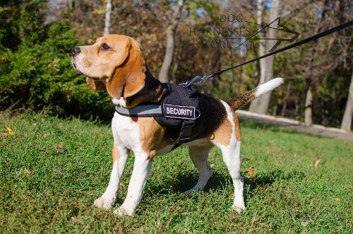 Reflective Beagle Dog Harness With Id