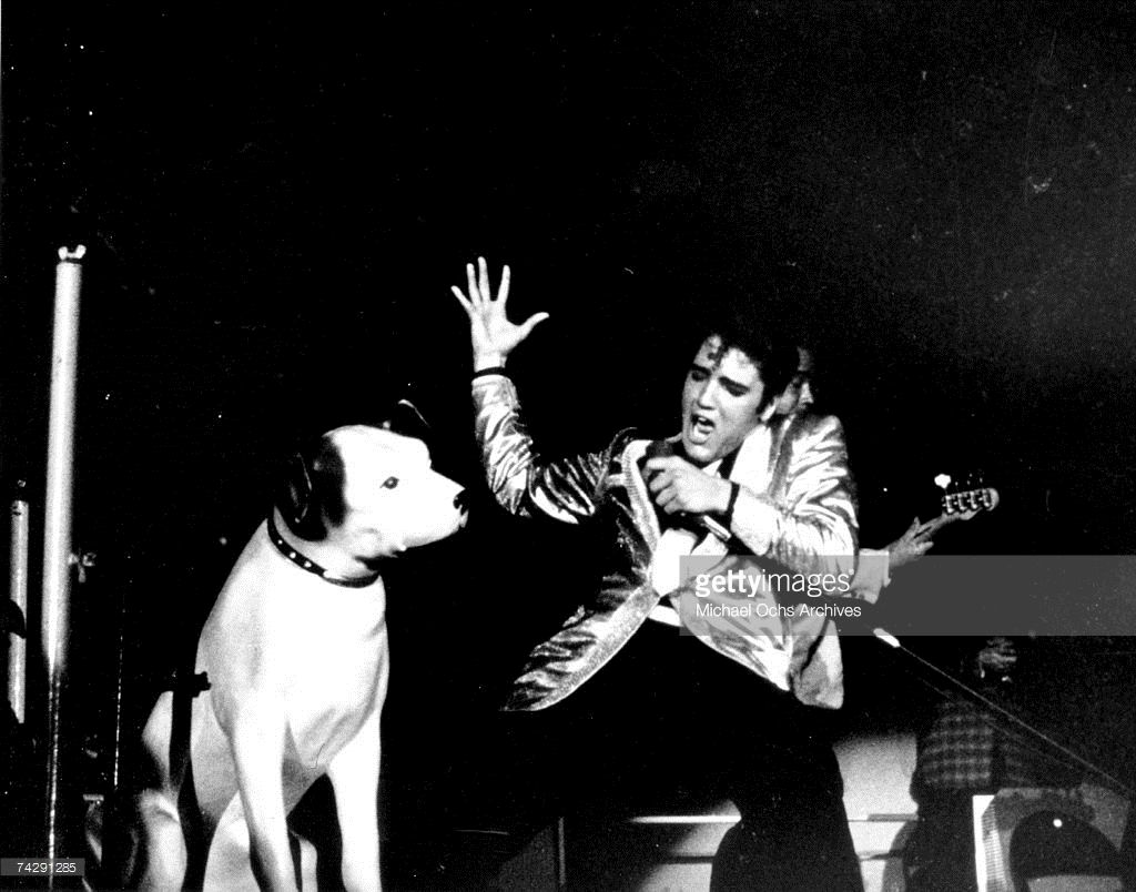 Pin On Elvis Presley 1950s The King
