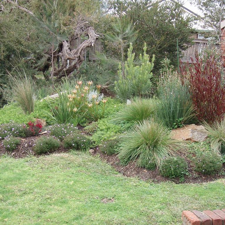 Modern Australian Native Garden Design