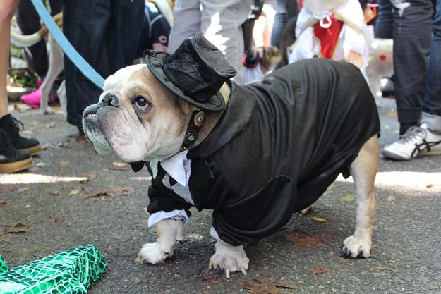 30 Best Costumes At Tompkins Square Dog Halloween Parade Dog
