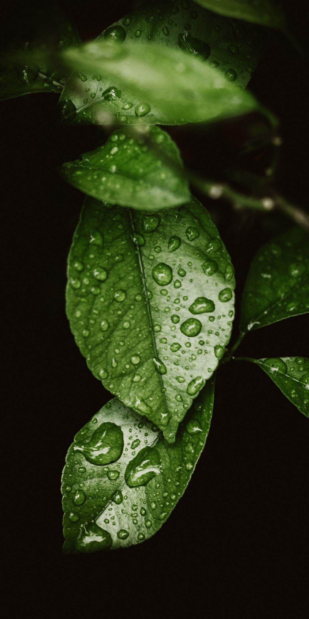 1080x2160 Drops On Leaf Macro Wallpaper Leaf Photography Water Droplets Photography Nature Wallpaper