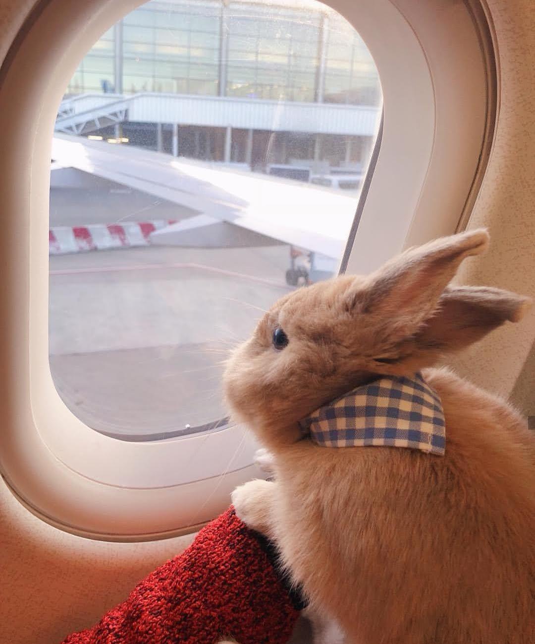 bunnies like to travel too | Bunnies | Cute baby bunnies ...