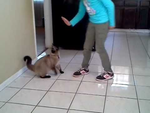 Gizmo the Cat gives HIGH FIVE!
