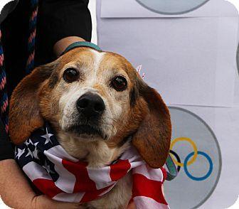 Media Pa Beagle Meet Charlie A21881692 Olympic Special A Dog