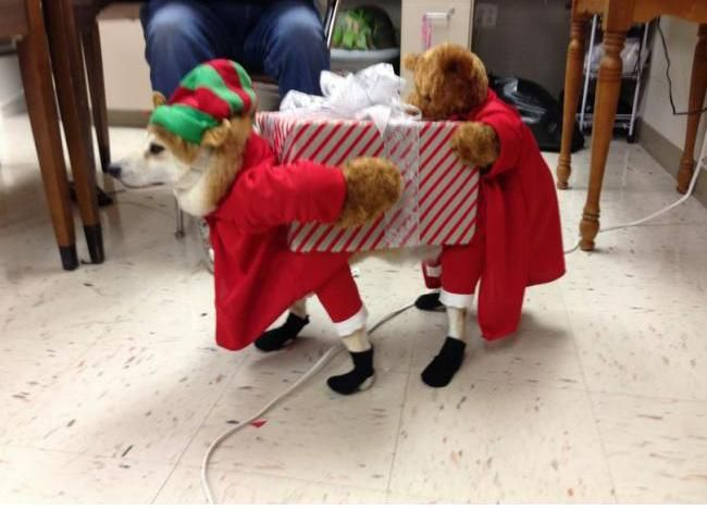 Homemade Elf Costume Ideas Christmas Dog Costume Dog Costumes