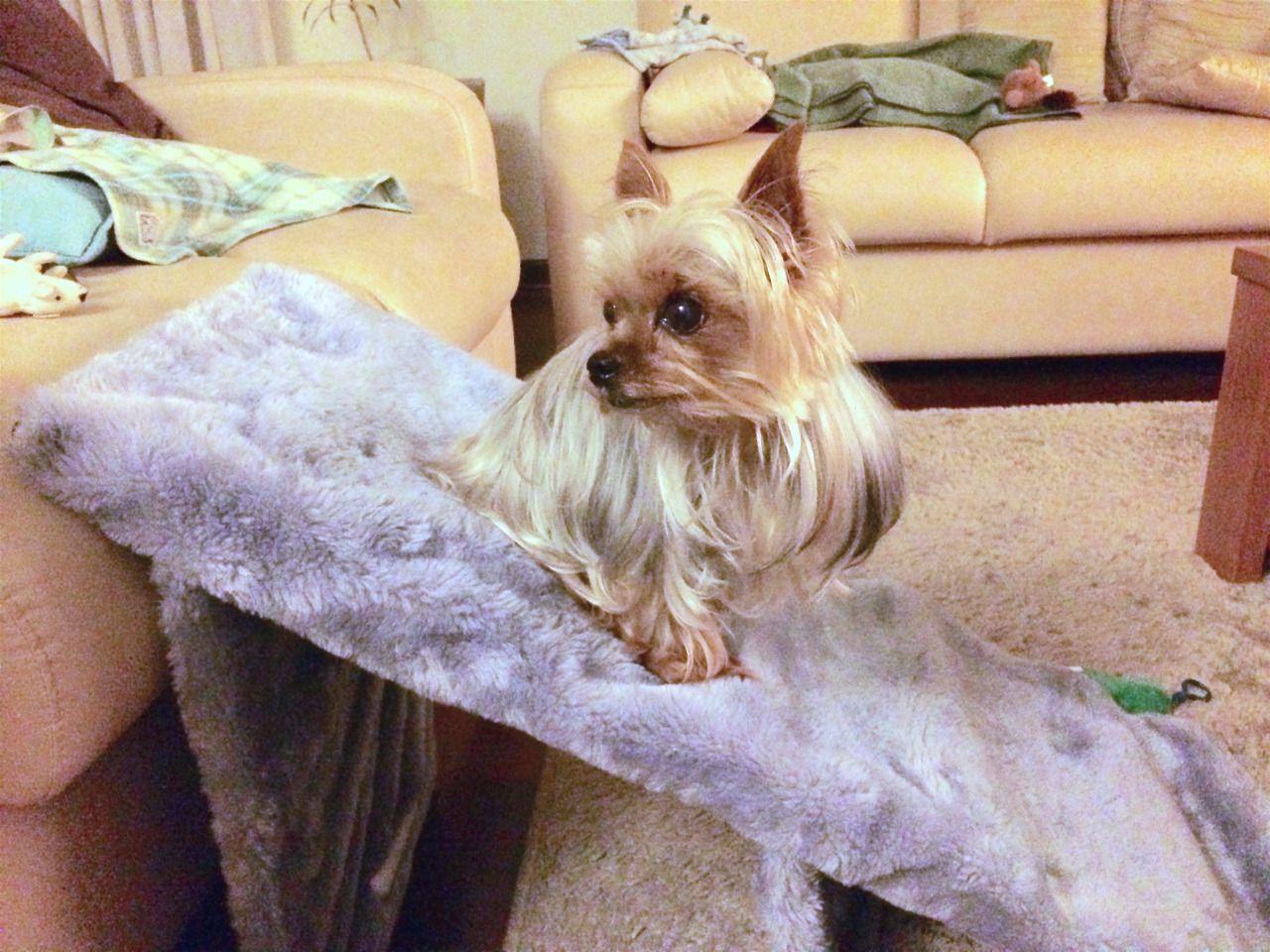 RAMPA PORTÁTIL PARA CACHORRO Meu cachorro está ficando idoso e faz muito esforço para subir e descer do sofá, e como a escadinha de cachorro também demanda esforço, resolvi criar essa rampa feita com...