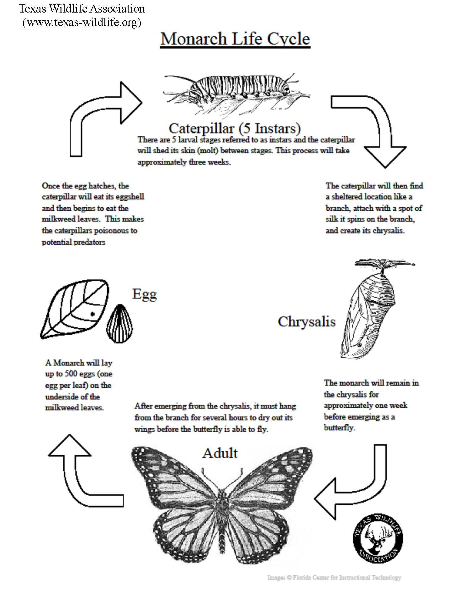 Monarch Butterfly Life Cycle Lesson Texas Wildlife Association Butterfly Coloring Page Butterfly Life Cycle Lessons Butterfly Life Cycle Activity