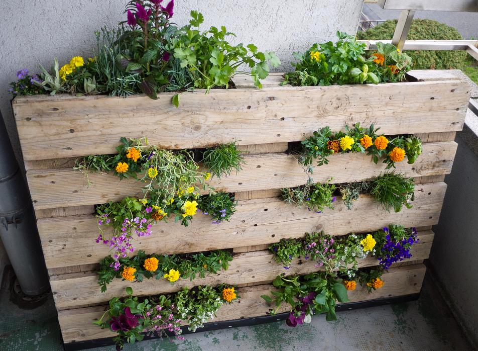 faire son potager et cultiver des l gumes en pot sur un balcon d co plantes potager palettes. Black Bedroom Furniture Sets. Home Design Ideas