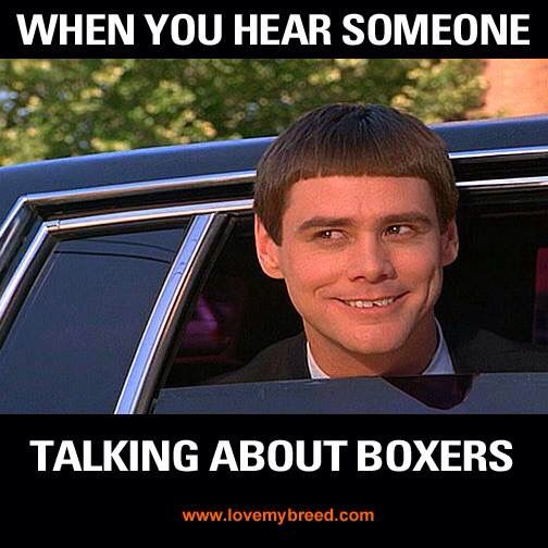 Talking about Boxers