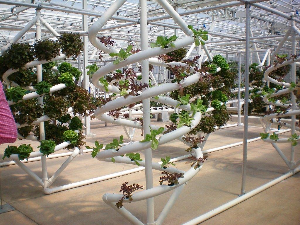 disney hydroponic garden - Google Search | Hydroponics | Pinterest ...