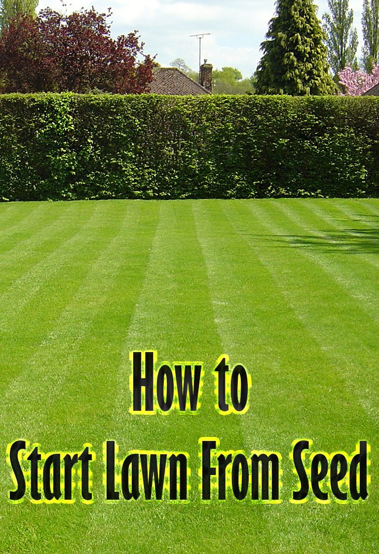 To Start New Lawns Many People Wonder Which Is Better Laying Sod Or Sowing Seeds While Laying Sod Is Fast And Produce Planting Grass Grass Seed Seeding Lawn