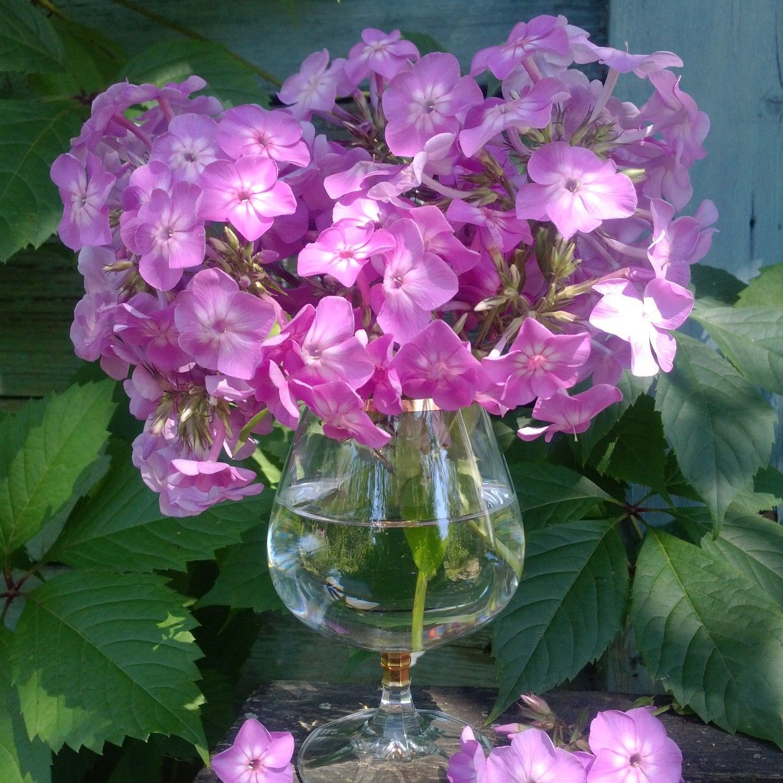 Pin by Olga Baldina on flowers in my photos Pinterest