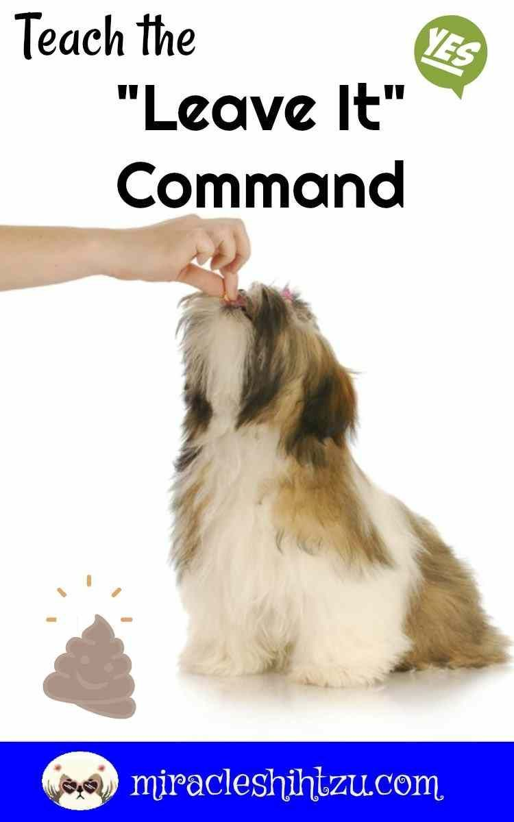 Teaching Your Dog The Leave It Command Will Keep Your Shih Tzu