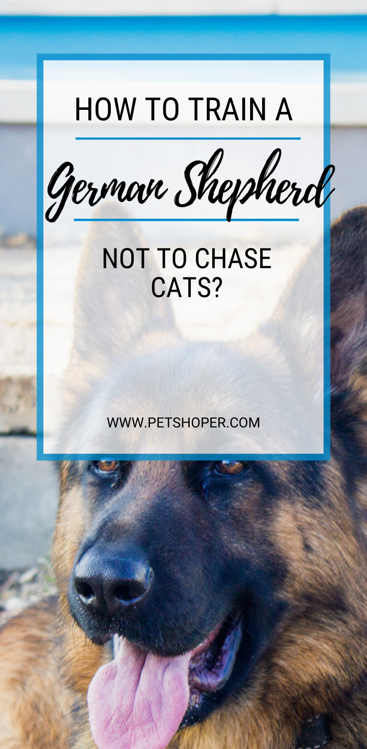 Can German Shepherds Live With Cats All To Know In 2020 German Shepherd Best Dogs For Families Best Apartment Dogs