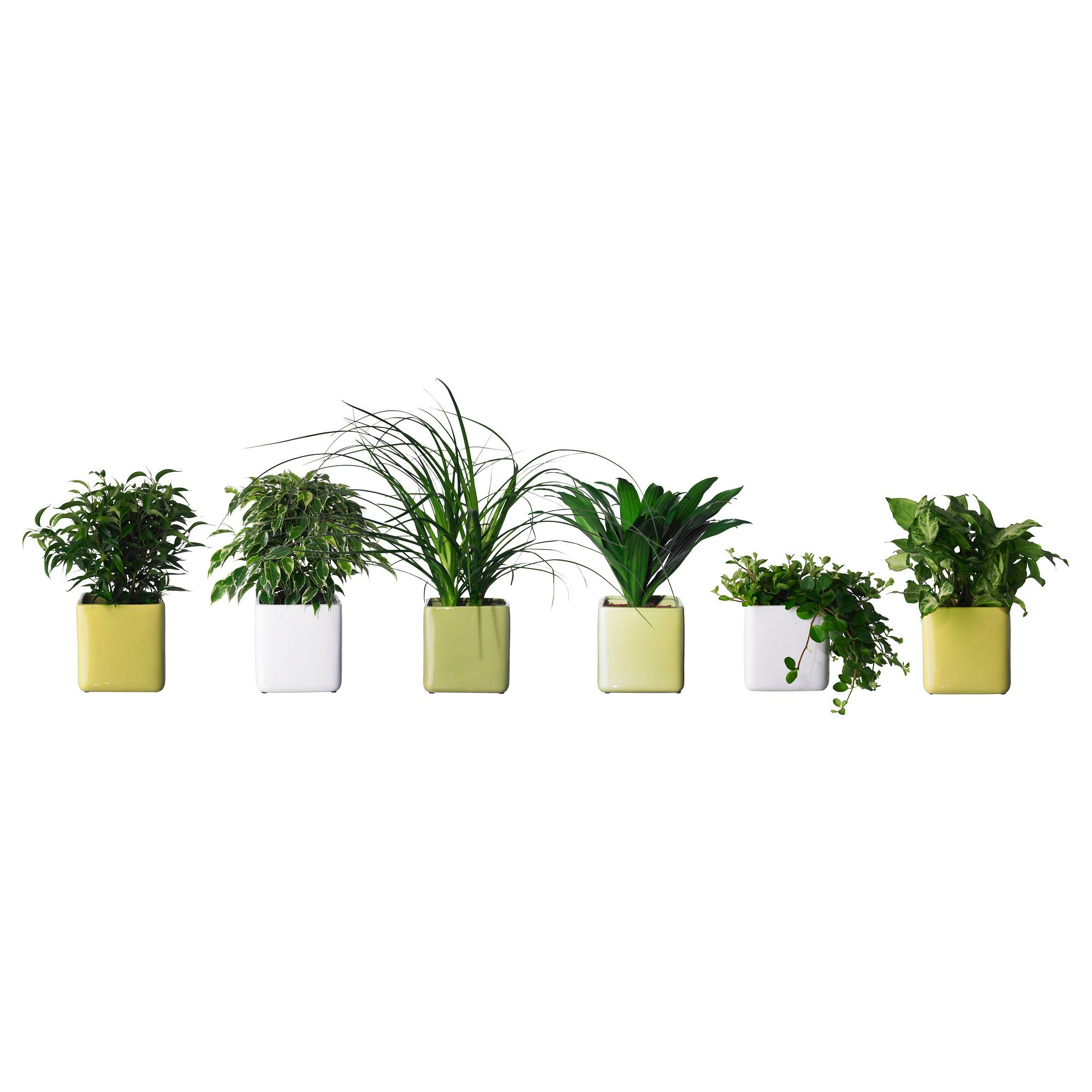 Choose From A Range Of House Plants Potted At IKEA