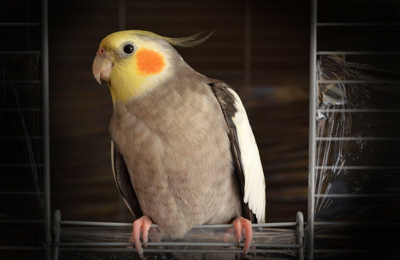 Картинки загадочных птиц часто проблемы