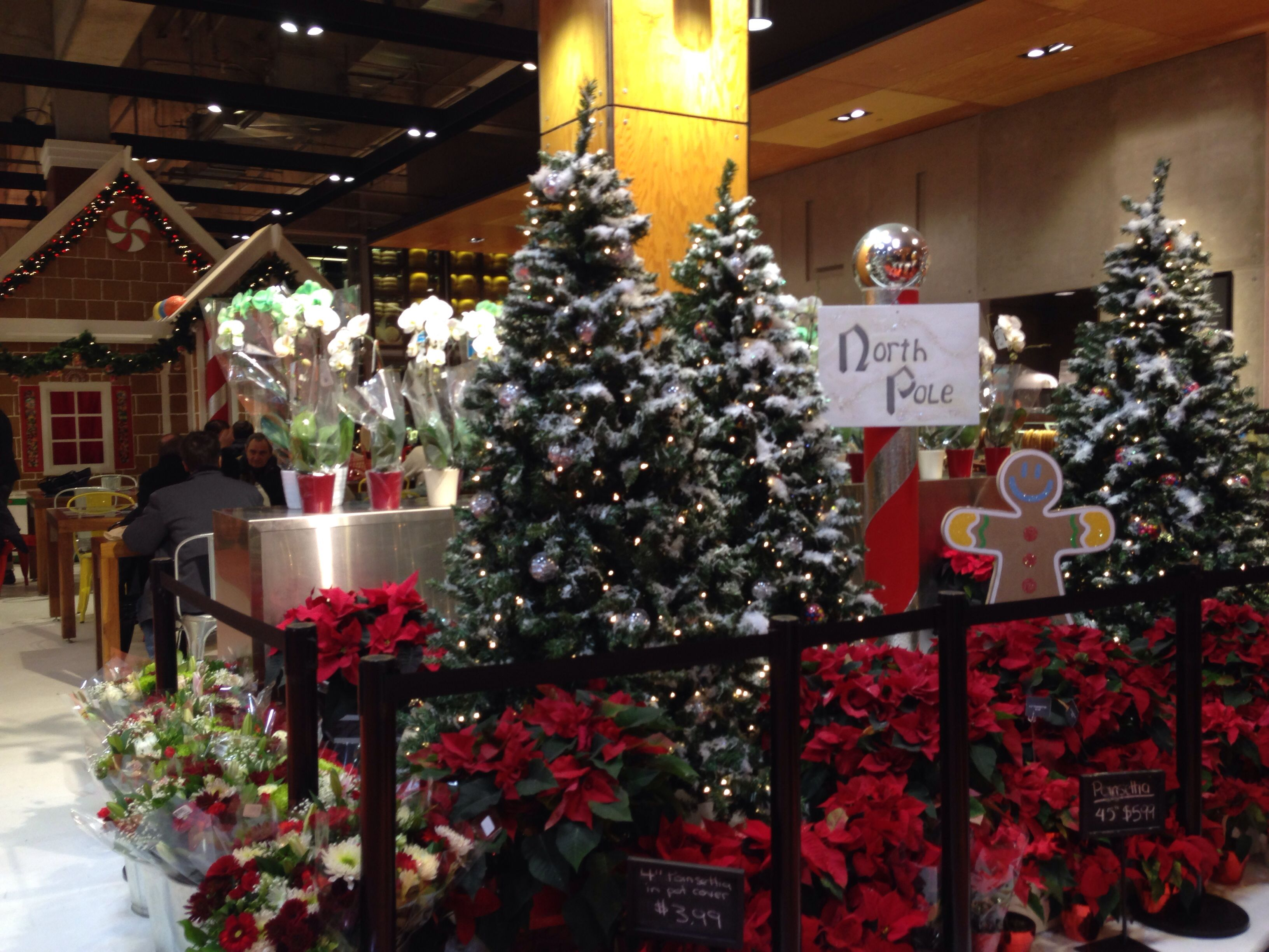 Loblaws | Christmas Trees | Pinterest | Christmas Tree and Christmas