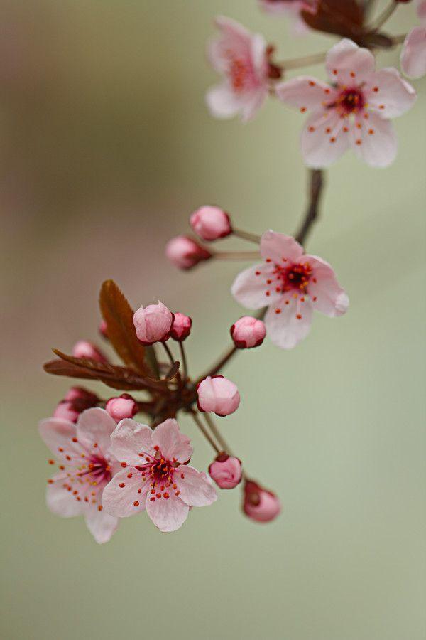 Spring Flowers By Dav D Daniels 500px Pink Spring Flowers Spring Flowers Flowers Nature