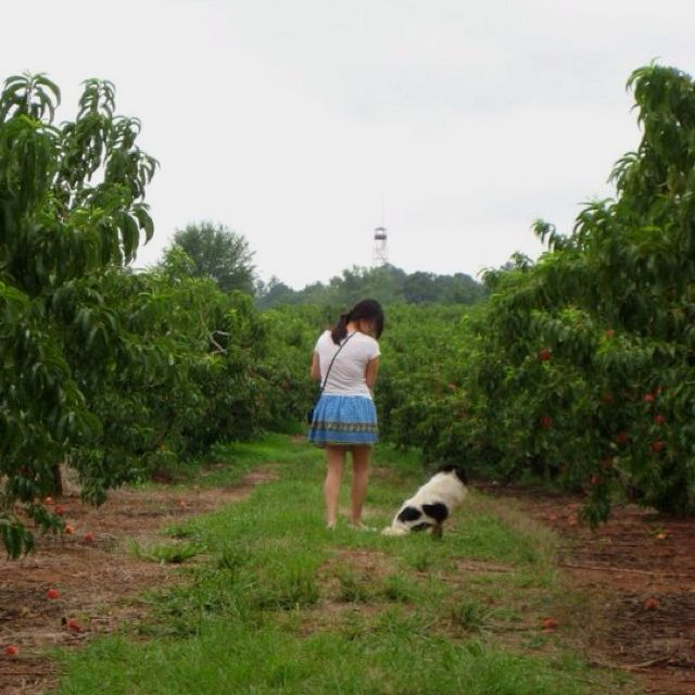 That day we went peach picking