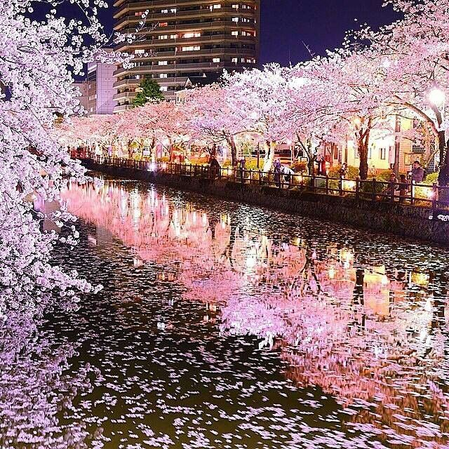 Most Romantic Places In The World 2014: Tokyo, Japan (cherry Blossoms)