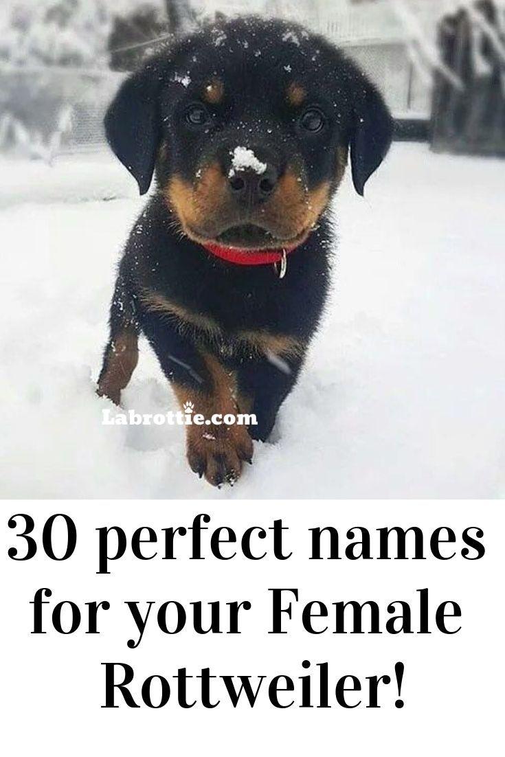 200 girl dog names az in 2020 hundenamen rottweiler