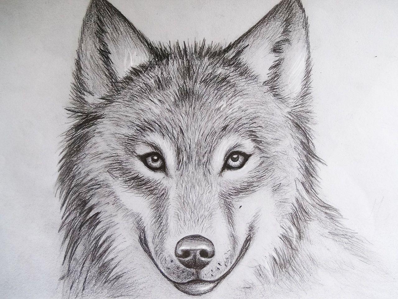Lobo Dibujo, Dibujos Y