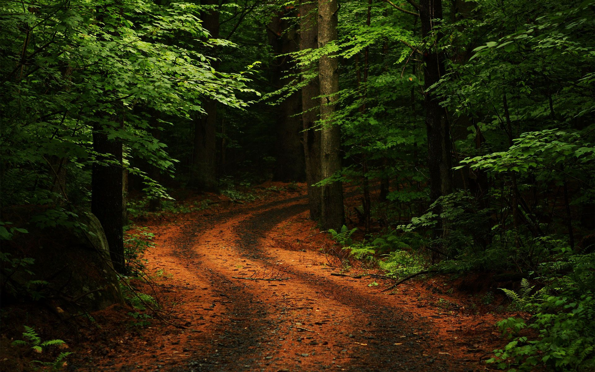 Summer Forest Road HD iPhone Wallpaper Hd nature