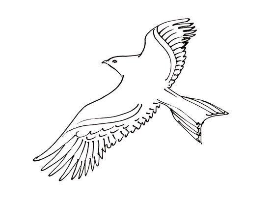 Coloriage oiseau 14 coloriage oiseaux coloriages animaux fou de bassan animals - Coloriage de oiseau ...