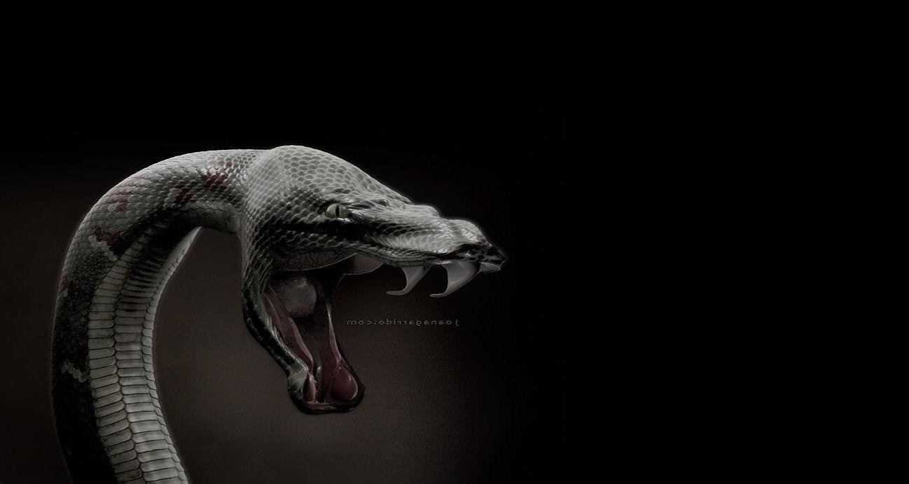 Photo Snake Wallpaper Snake Art Black Mamba Snake