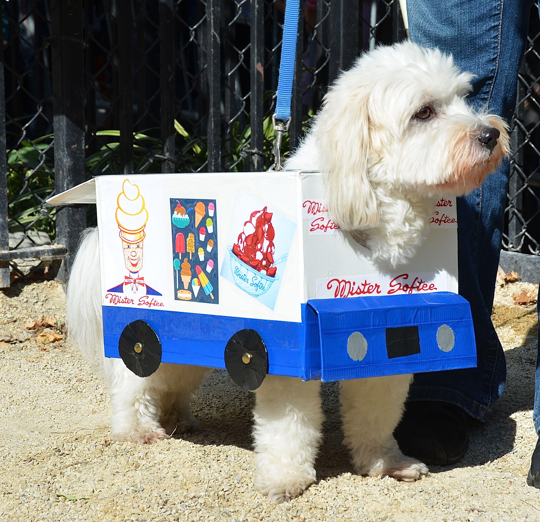 Mr Softee Truck Havanese Dogs Halloween Nyc Havanese Dog
