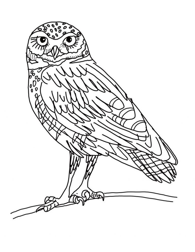 Coloring Rocks Owl Coloring Pages Owl Pictures To Color Coloring Pages For Kids