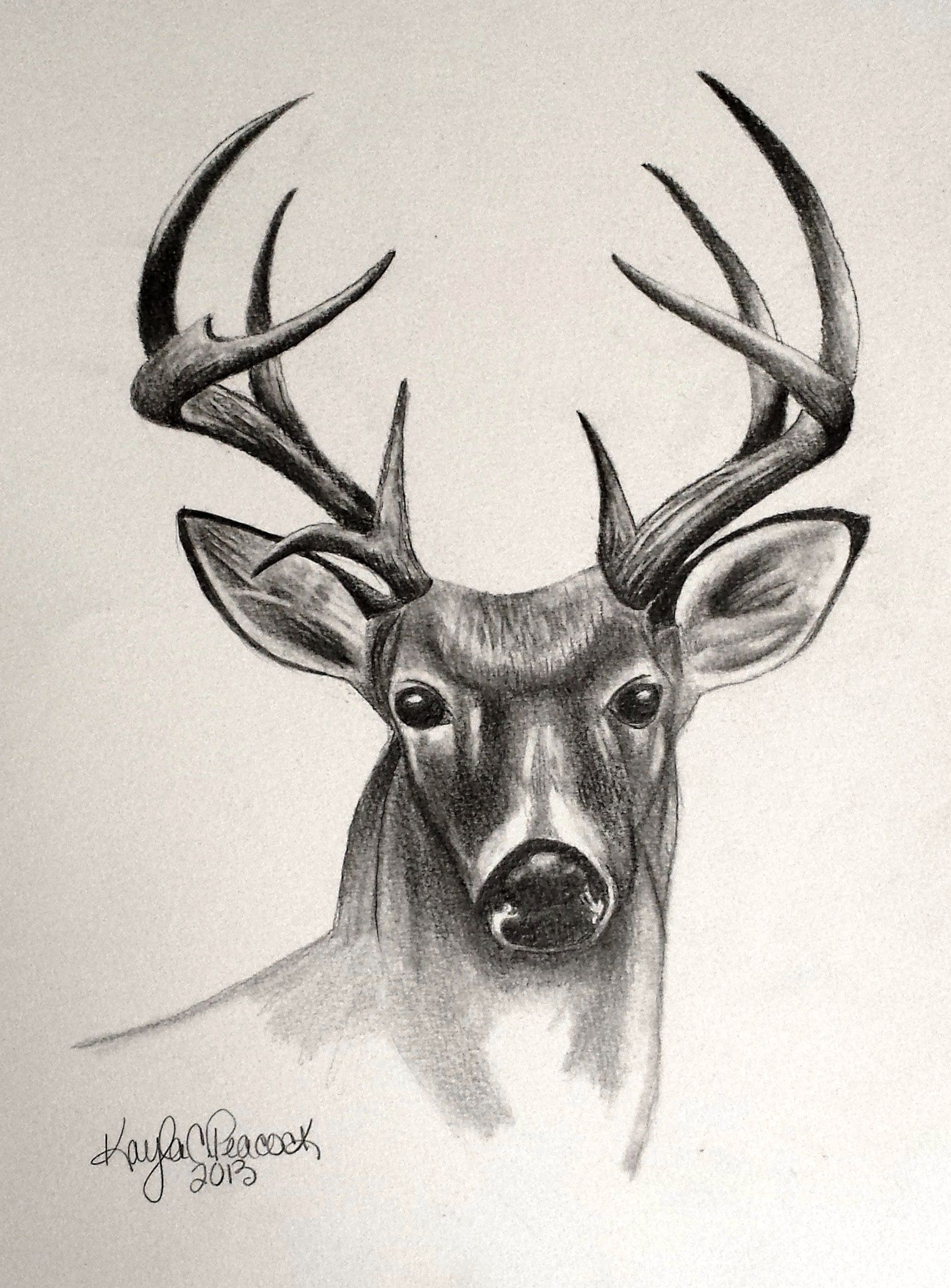 Deer sketches bing images