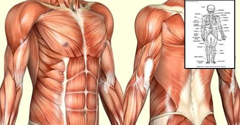 Get The Edge, Learn EVERYTHING You Need To Know About Anatomy And ...