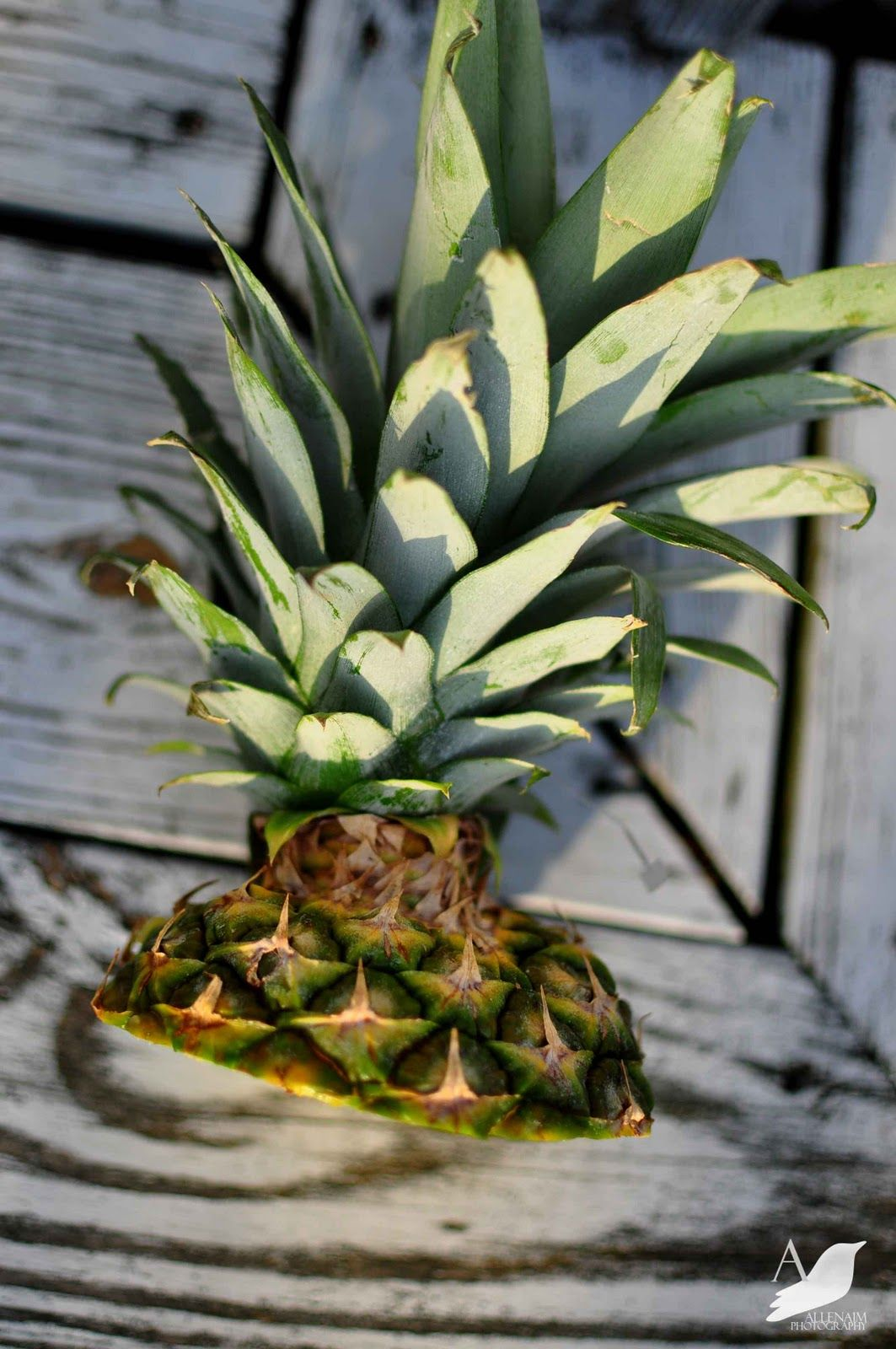 A nest for all seasons how to plant a supermarket for How to plant a pineapple top in a pot