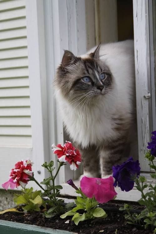 pretty kitty and flowers