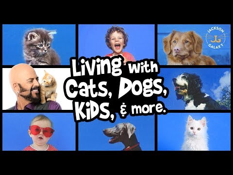 3 Total Home Harmony Life With Cats Dogs Kids More Youtube Dogs And Kids Cats Dogs