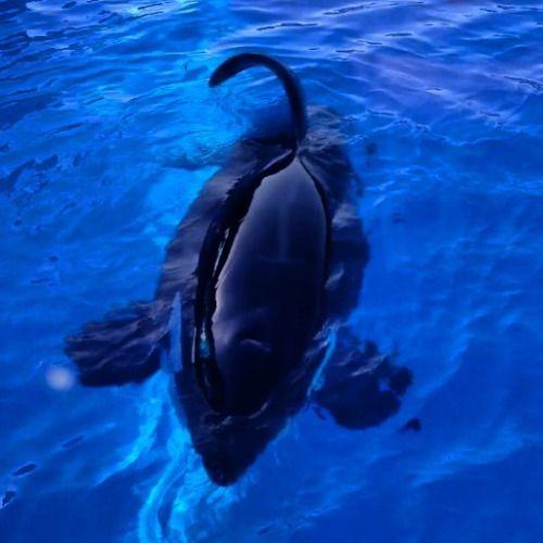 another collapsed dorsal good job, captivity! *sarcasm* Until - marine biologist job description