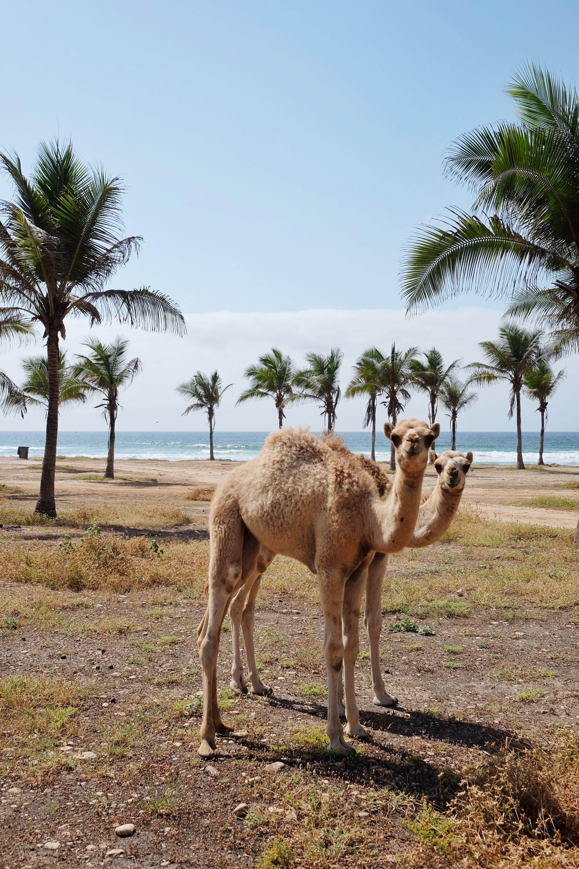 Oman Part 2 Arabian Beach Stay In Salalah Salalah Oman Travel Salalah Oman